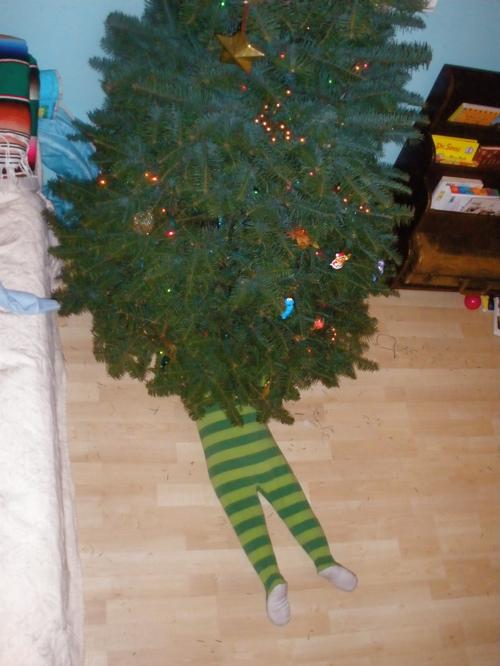 Reese under christmas tree