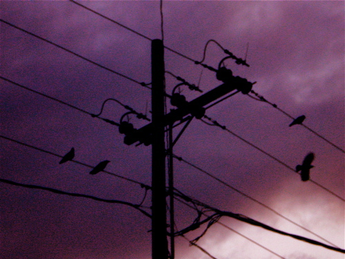 Birds_on_wire1